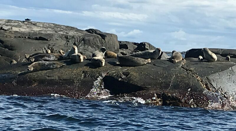 Sälsafari i Fjällbacka